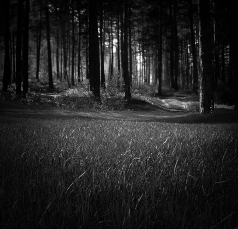 forest-315184_1280